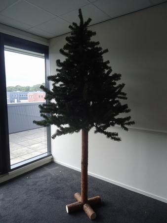 Pinus 200, boom 150 cm met 50 cm stam