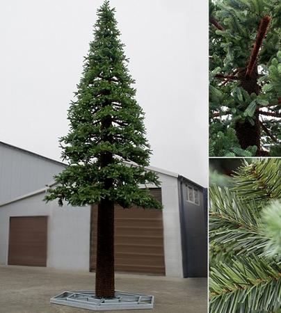 Pine tree indoor 500 cm