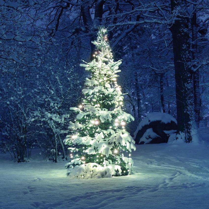 Led mini led snoer voor de kerstboom