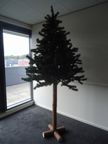 Pinus 230, boom 180 cm met 50 cm stam